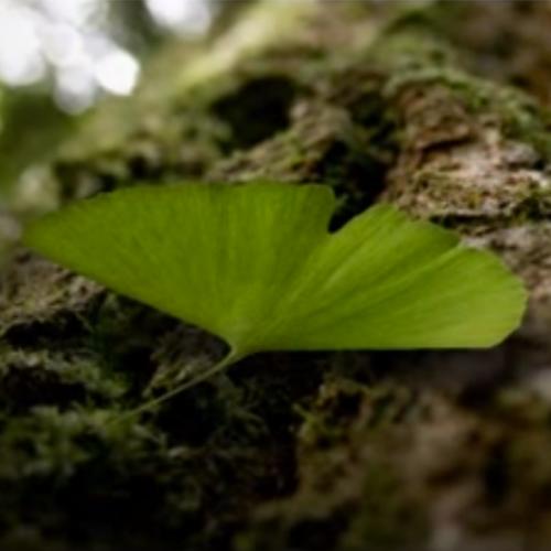 Tutorial 33 - 3D Warps - Creating A Fluttering 3D Leaf